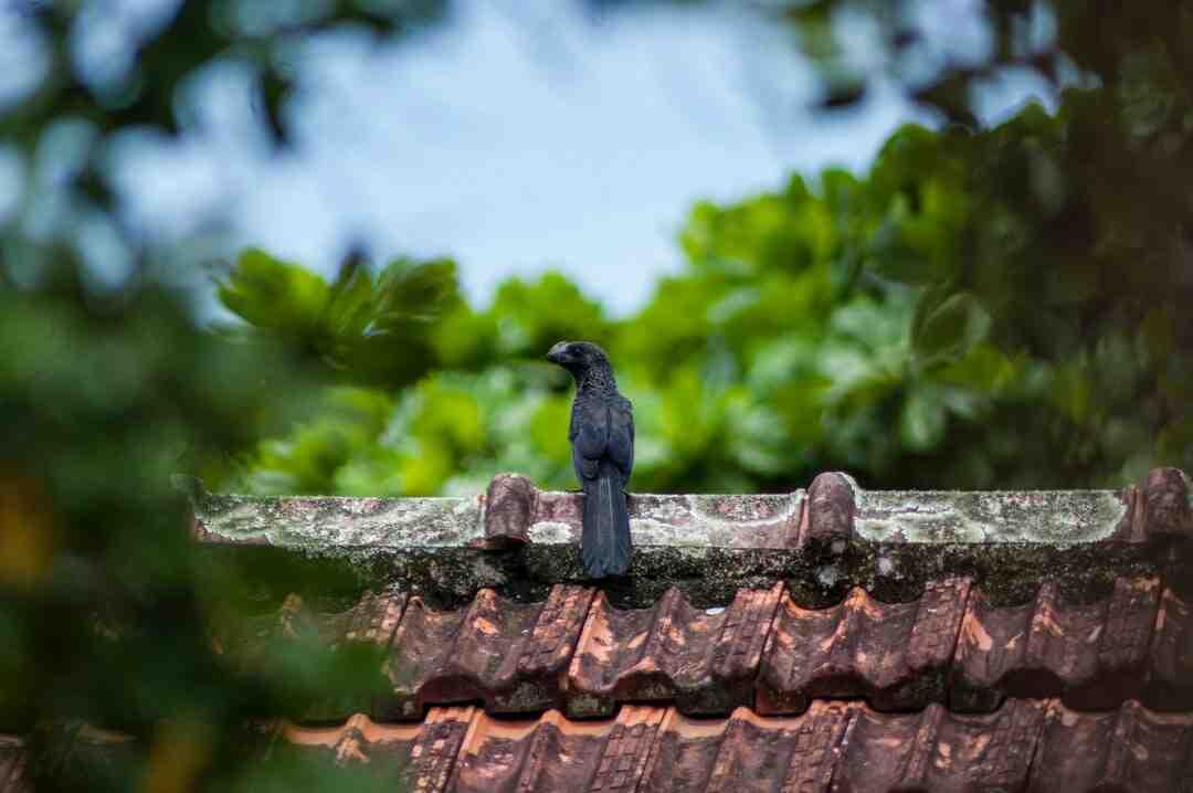 Comment isoler le toit d'une maison ancienne ?